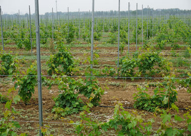 China 200G/M2 Zinc Coated Vineyard Trellis Posts , Trellis Support Posts For Australia supplier