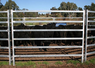 China Oval Tube Cow Fence Panel supplier