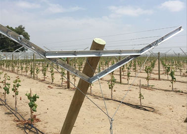 Grape Manor Vineyard Trellis Systems Reduced Installation And Setup Costs