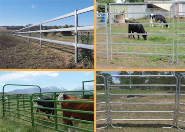 China Easily Assembled Farm Fence Panels 1.8*2.1m Round Pipe Cattle Yard Gates factory