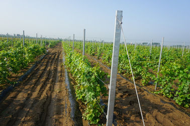 8ft Galvanised H Hole Type 2mm Vineyard Trellis Posts