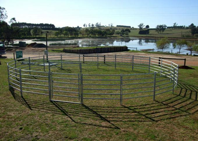 Heavy Duty Cattle Yard Panels And Gate 80G Zinc Coated 80MM Tube Easy Install
