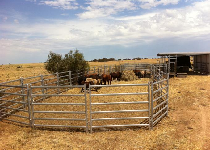 1.5 X 2.1 M Cattle Yard Panels , Metal Cattle Panels Galvanized / Pvc Coated For Farm